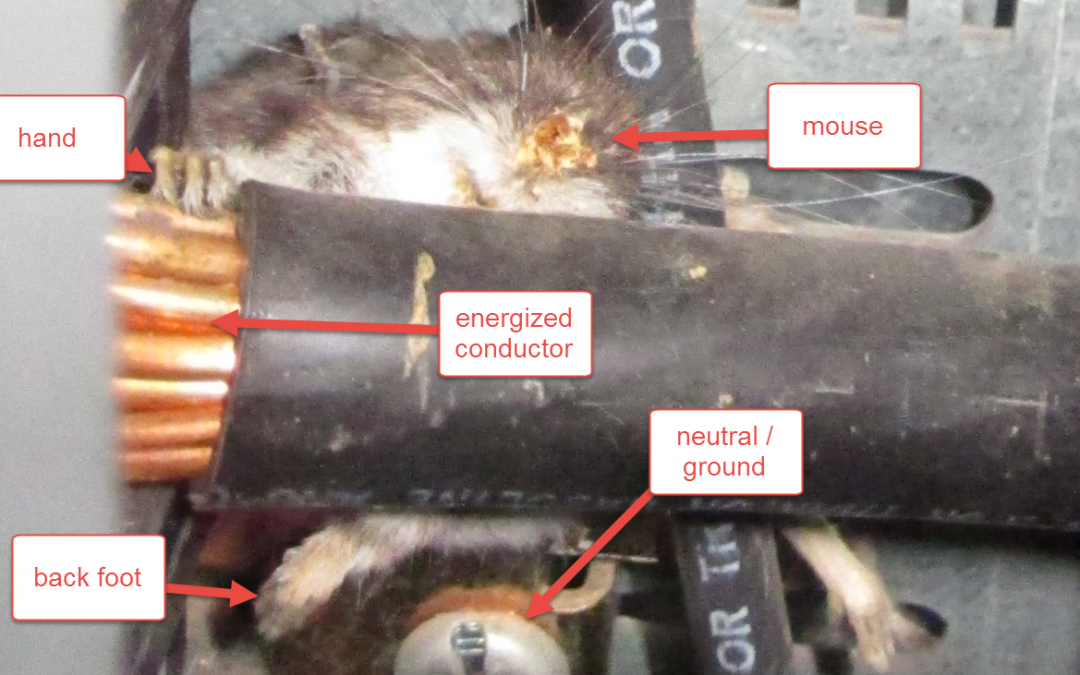 A Mouse Took Down My Factory